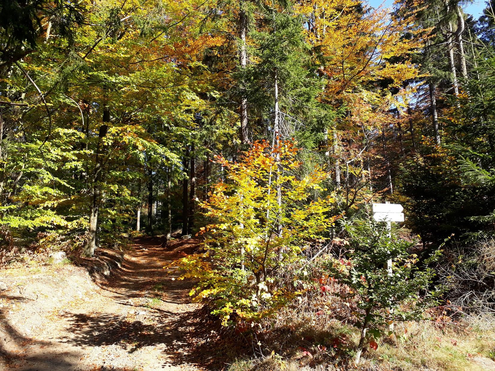 Herbststimmung Ochsenkopf